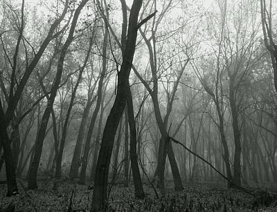 Photograph - Sentinels by Wild Thing