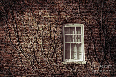 Photograph - Lost Window by David Arment