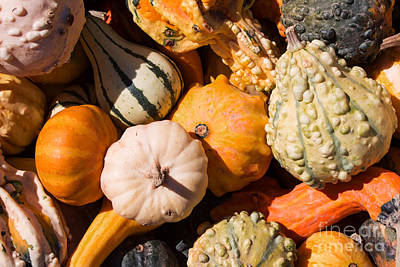 Photograph - Lots Of Little Gourds by Barbara McMahon