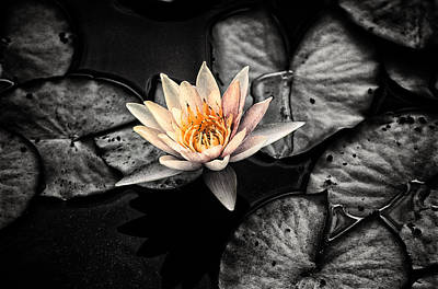 Photograph - Lotus 2 by Jeremy Herman