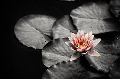Photograph - Lotus 3 by Jeremy Herman