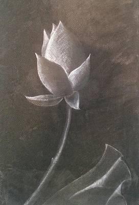 Lotus  Art Print by Amy Jago-Ford