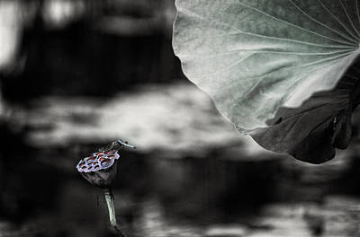 Photograph - Lotus And Dragonfly 2 by Jeremy Herman