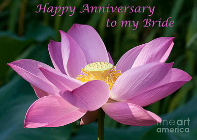 Photograph - Lotus Anniversary by Dale Nelson