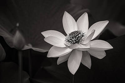 Lotus Black And White Art Series Art Print