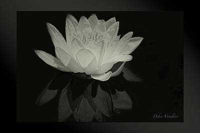 Photograph - Lotus Black/white by Debra     Vatalaro