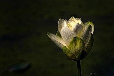 Lotus Blossom Art Print by Travis Burgess