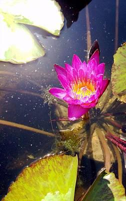 Lotus Day Art Print