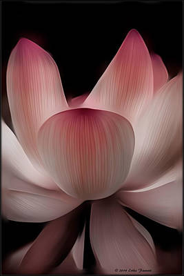 Photograph - Lotus by Erika Fawcett