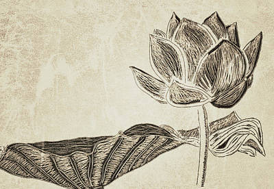 Drawing - Lotus Flower And Leaf by Patricia Januszkiewicz