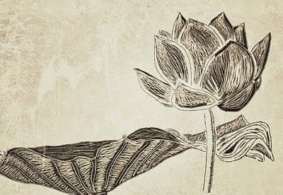 Lotus Flower And Leaf Art Print