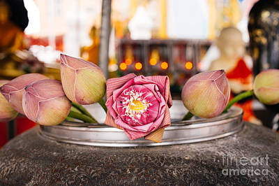 Flowers Photograph - Lotus Flower Offering by Dean Harte