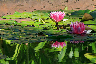 Photograph - Lotus Flower Reflections by Beth Sargent