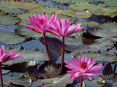 Art Print featuring the photograph Lotus Flower by Sergey Lukashin
