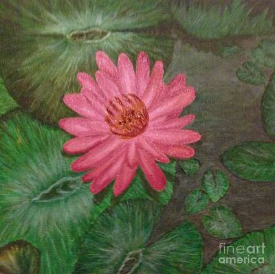Water Lilly Art Print by S P