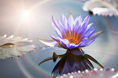 Photograph - Lotus Flower With Sun Flare by Susan Schmitz