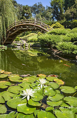 Willow Lake Photograph - Lotus Garden - Japanese Garden At The Huntington Library. by Jamie Pham
