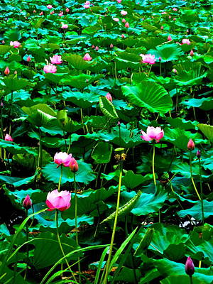 Photograph - Lotus Heaven - 131 by Larry Knipfing