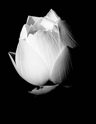 Lotus In Black And White Art Print