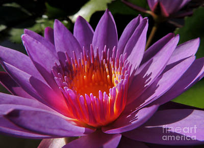Photograph - Lotus by Kristine Merc