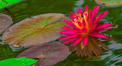 Dragonflys Photograph - Lotus Landing by Brian Stevens