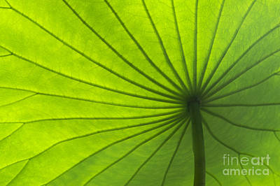Aquatic Plant Photograph - Lotus Leaf by Tim Gainey