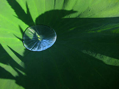 Photograph - Lotus Leaf With Dew   by Robin Street-Morris