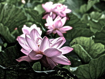 Photograph - Lotus Life - 4 by Larry Knipfing