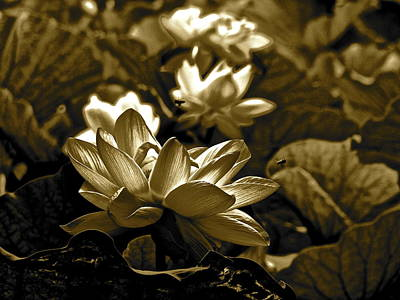 Photograph - Lotus Life - 5 by Larry Knipfing