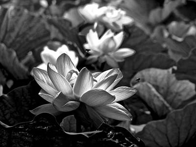 Photograph - Lotus Life - 6 by Larry Knipfing