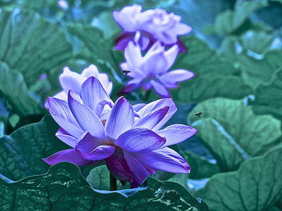 Photograph - Lotus Life - 9 by Larry Knipfing