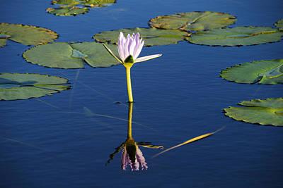 Photograph - Lotus-lily by Ankya Klay