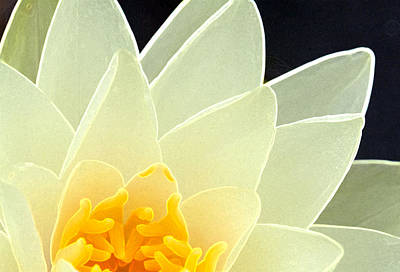 Photograph - Lotus by Melinda Fawver