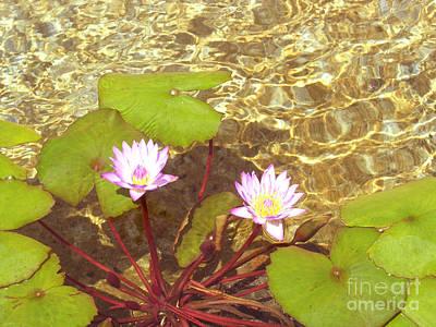 Art Print featuring the photograph Lotus by Mini Arora