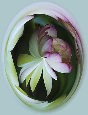 Lotus Mirror Art Print by Jean Noren