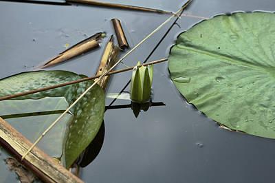 Photograph - Lotus - Nature Photograph by Jane Eleanor Nicholas