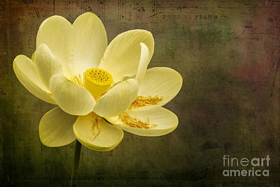 Photograph - Lotus Notes by Vicki DeVico