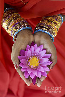 Hindu Photograph - Lotus Offering by Tim Gainey