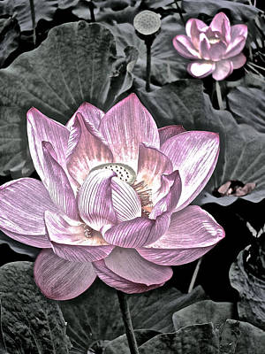 Photograph - Lotus On My Mind - 10 by Larry Knipfing