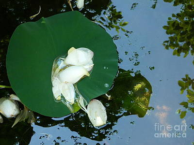 Photograph - Lotus Petals by Jane Ford