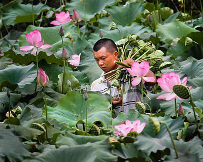 Photograph - Lotus Picker by Karen Saunders
