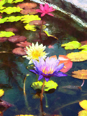 Water Gardens Photograph - Lotus Pond by Susan Savad