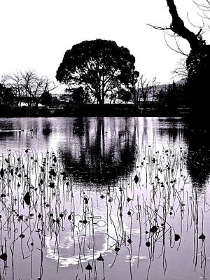 Photograph - Lotus Pond Winter - 1 by Larry Knipfing