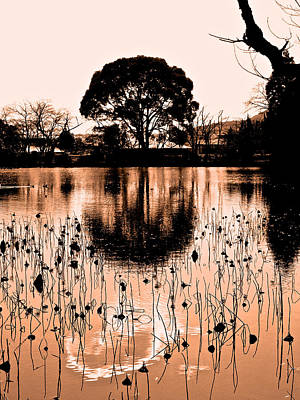 Photograph - Lotus Pond Winter - 5 by Larry Knipfing