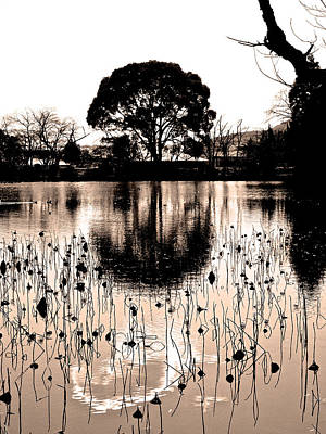 Photograph - Lotus Pond Winter - 7 by Larry Knipfing