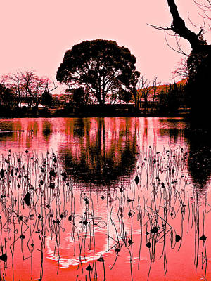 Photograph - Lotus Pond Winter - 9 by Larry Knipfing