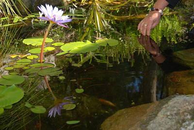 Photograph - Lotus Sanctuary by Ankya Klay