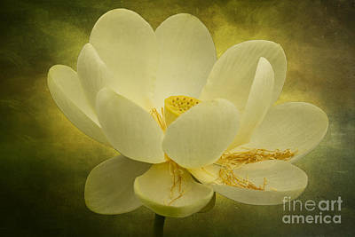 Photograph - Lotus by Vicki DeVico