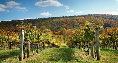 Pastoral Vineyard Photograph - Loudon County Vineyard I by Steven Ainsworth