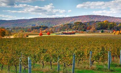 Pastoral Vineyard Photograph - Loudon County Vineyard II by Steven Ainsworth